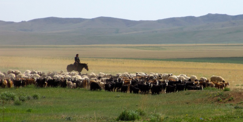 Why Travel to Mongolia?